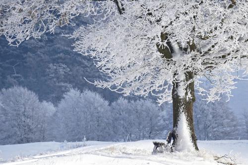 Winter-4680354_1920