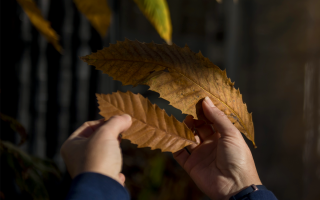 2021-3-Feature-Chestnut-Leaves-WB
