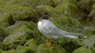 1s6-bird-grants_crop