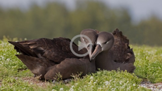 1s6-birds-of-concern_crop