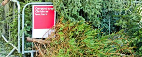 Xmas-tree-recycle-hero-gettyimages-111934627
